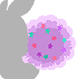 Pink Bunstar-T-Tail.png